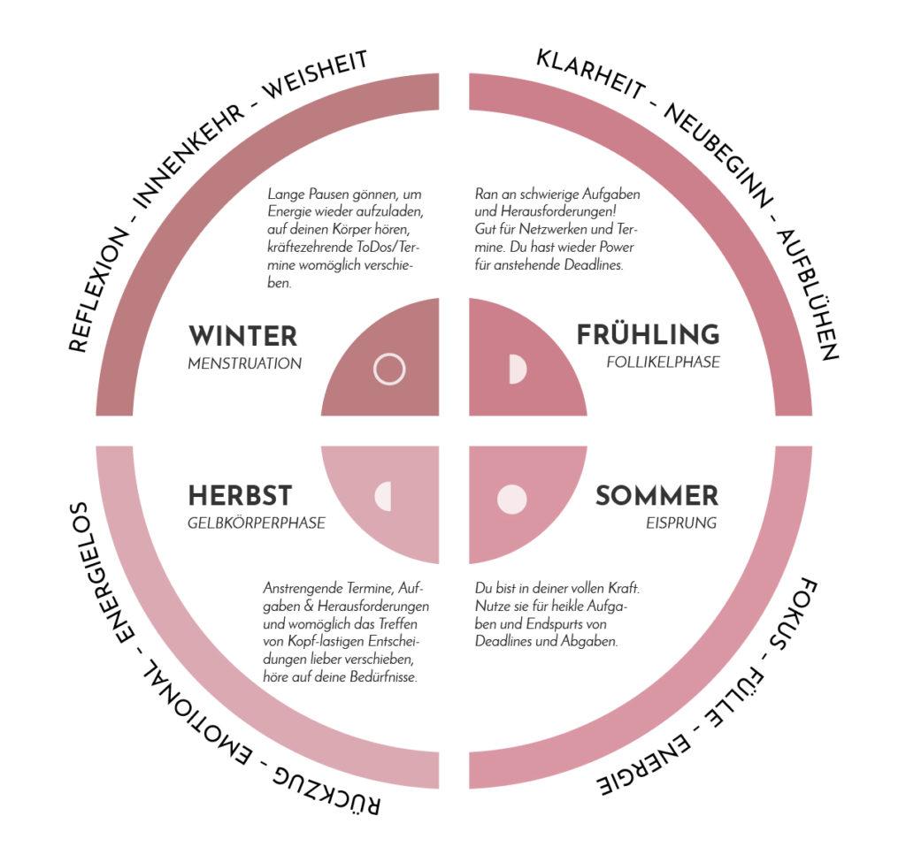 weiblicher Zyklus Menstruationsphasen Grafik